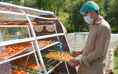 USPCAS-E equips Pakistani communities with the latest technologies in fruit drying using renewable energy